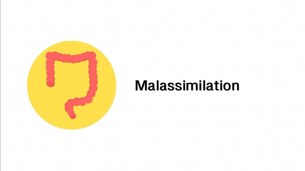 Malassimilation